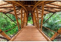 Pourquoi utiliser le bambou en construction ?